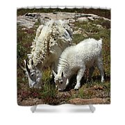 Mountain Goat Nanny And Kid Foraging At Columbine Lake - Weminuche Wilderness - Colorado Shower Curtain
