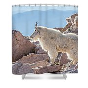 Mountain Goat Takes In Its High Altitude Home Shower Curtain
