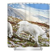 Mountain Goats 1 Shower Curtain