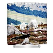 Mountain Goats 2 Shower Curtain