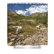 Mountain Goats At Columbine Lake - Weminuche Wilderness - Colorado Shower Curtain