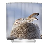 Mountain Hare - Scottish Highlands  #10 Shower Curtain