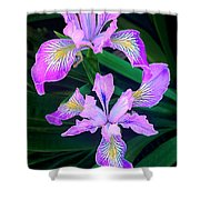 Mountain Iris In Flower California Shower Curtain