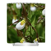 Mountain Lady Slippers Up Close Shower Curtain