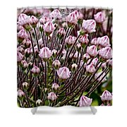 Mountain Laurel Bush Shower Curtain
