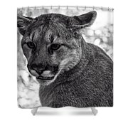 Mountain Lion Bw Shower Curtain
