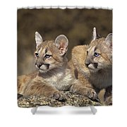 Mountain Lion Cubs On Rock Outcrop Shower Curtain