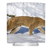 Mountain Lion Puma Concolor Hunting Shower Curtain