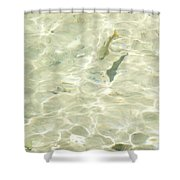 Mountain Stream Trout Shower Curtain