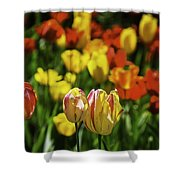 Mountain Tulips Shower Curtain