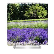 Mountainside Lavender Farm Shower Curtain