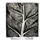 Mounts Botanical Garden 2374 Shower Curtain