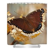Mourning Cloak Butterfly Shower Curtain