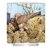 Mourning Dove And Chick Shower Curtain