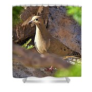Mourning Dove On The Hillside Shower Curtain