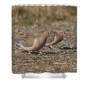 Mourning Dove Pair Shower Curtain