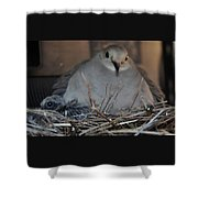 Mourning Dove With One Of Two Chicks Shower Curtain