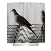 Mourning Doves Calverton New York Shower Curtain