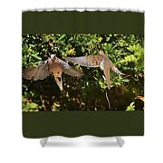 Mourning Doves Wings  Shower Curtain