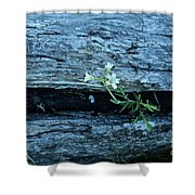 Mouse Eared Chickweed Shower Curtain
