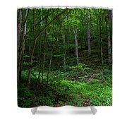 Mouth Of Pollly Hollow Shower Curtain