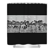 Moving Cattle Shower Curtain