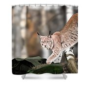 Moving Through The Forest Shower Curtain