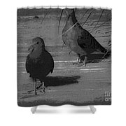 Mr And Mrs Dove Shower Curtain