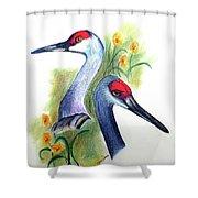 Mr And Mrs Sandhill Cranes Shower Curtain