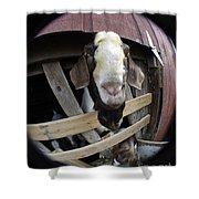 Mr B Goat Shower Curtain
