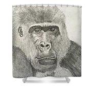 Mr Bananas Shower Curtain