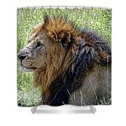 Mr. Big Stuff Shower Curtain