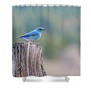 Mr. Bluebird Shower Curtain