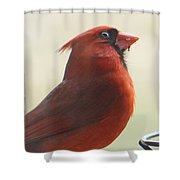 Mr Cardinal Shower Curtain by Maxine Billings