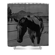 Mr Ed In Black And White Shower Curtain