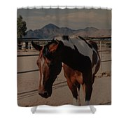 Mr Ed Shower Curtain