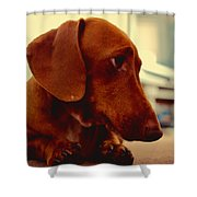 mr Fritz pose 1 Shower Curtain