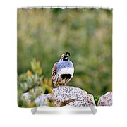 Mr. Gambel Shower Curtain