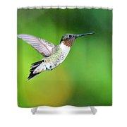 Mr. Humming Bird Shower Curtain