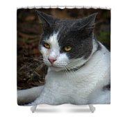 Mr. Kitty   Shower Curtain