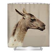 mr Llama Shower Curtain