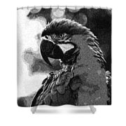 Mr Macaw The Parrot Shower Curtain