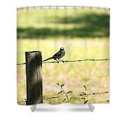 Mr. Mockingbird Shower Curtain