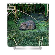 Mr. Muscrat Shower Curtain