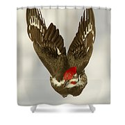 Mr. P On The Wing Shower Curtain