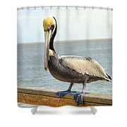 Mr. Pelican Shower Curtain