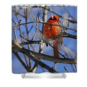 Mr. Red Beauty Shower Curtain