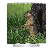 Mr. Squirrel Shower Curtain