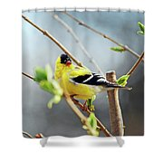 Mr. Sunshine Shower Curtain