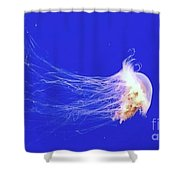 Mr.jelly Shower Curtain